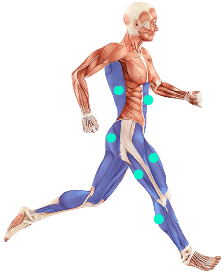 Laufband Muskeln Steigung