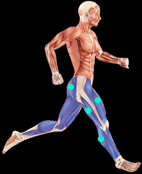 Laufband Muskeln